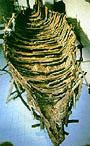 Vissersboot uit Jezus' tijd