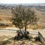 Abraham plantte daar een tamarisk